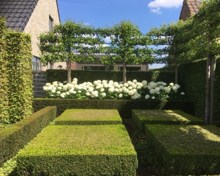 categorie: architectonische tuin